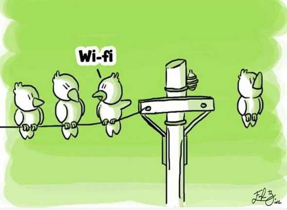 chiste-wifi-pajaros