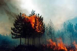 Sensores-moviles-para-prevenir-incendios-forestales