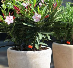 Riego por goteo en plantas colocadas en macetas